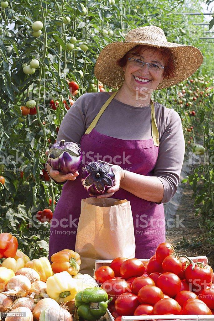 Farmer with eggplants royalty-free stock photo