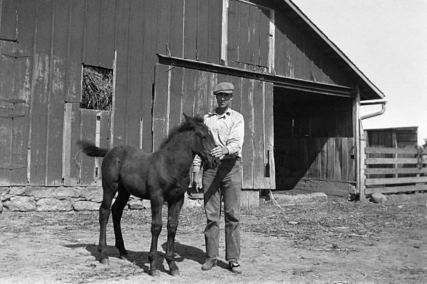 農家と子馬 barnyard になった 1935 年、レトロ - 1930~1939年 ストックフォトと画像