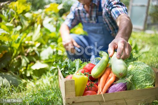 Farmer with full box of raw organic vegetable. Community garden.