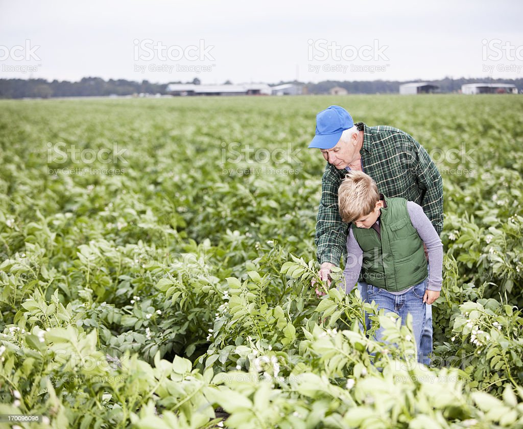 Farmer with grandson in field royalty-free stock photo