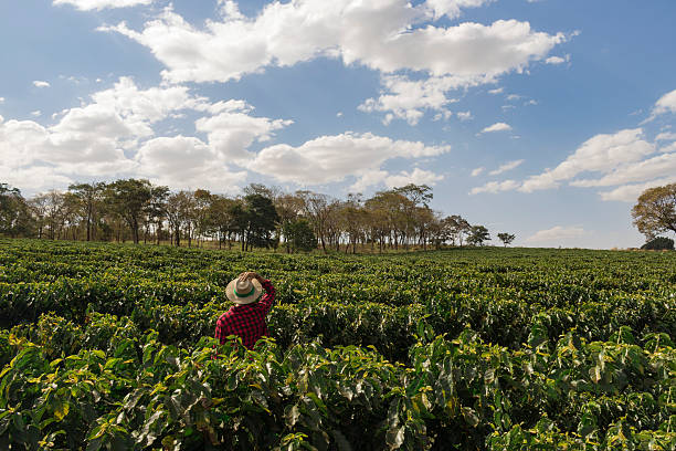 farmer with hat looking the coffee plantation field - coffee farmer foto e immagini stock