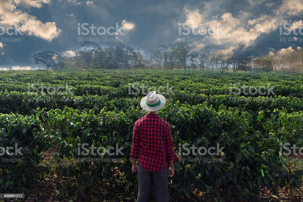 Farmer with hat looking the coffee plantation field - foto de acervo