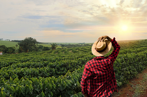 istock Farmer with hat standing in a coffee plantation 845602292