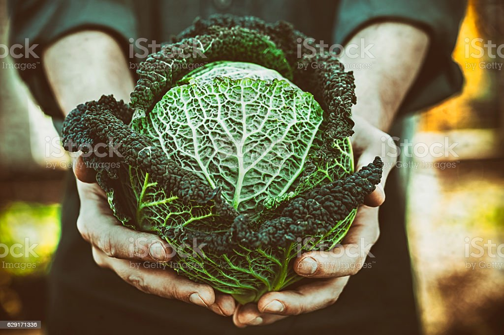 Farmer with kale stock photo