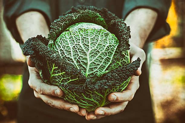 Farmer with kale stock photo