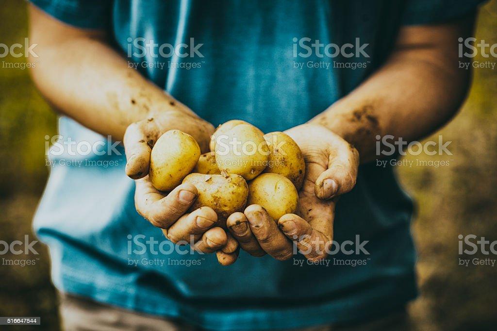 Agriculteur avec des pommes de terre - Photo