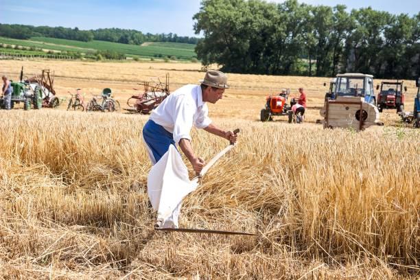 farmer with scythe on the field stock photo