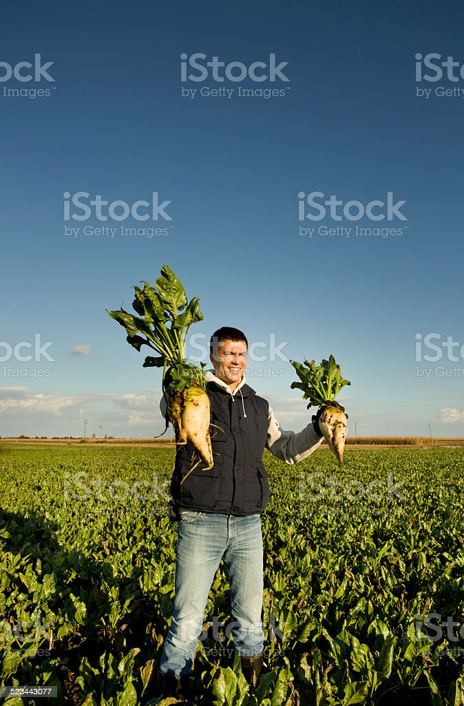 Farmer with sugar beets stock photo