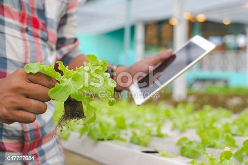 1047941544istockphoto Farmer with tablet for working organic hydroponic vegetable garden at greenhouse. Smart agriculture, farm , sensor technology concept. Farmer hand using tablet for monitoring temperature. 1047727684