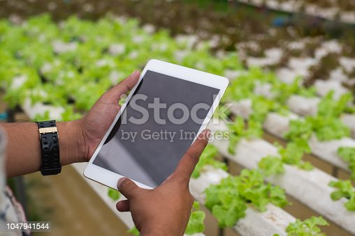 istock Farmer with tablet for working organic hydroponic vegetable garden at greenhouse. Smart agriculture, farm , sensor technology concept. Farmer hand using tablet for monitoring temperature. 1047941544