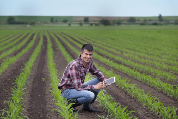 Bauer mit Tablet im Maisfeld – Foto