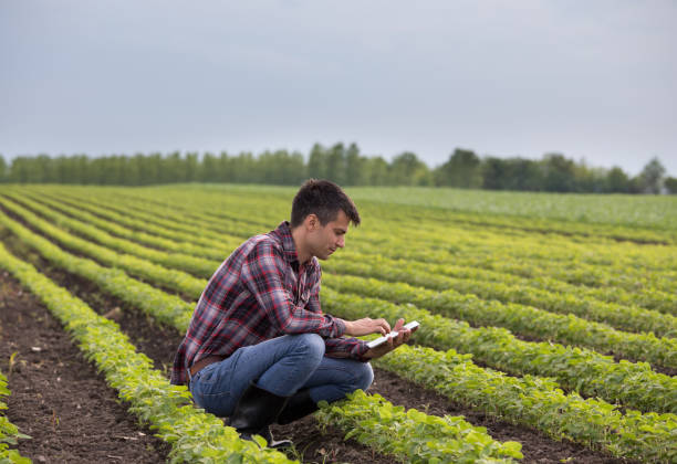 Farmer with tablet in soybean field Young handsome farmer with tablet squatting in soybean field in spring. Agribusiness and innovation concept crop plant stock pictures, royalty-free photos & images