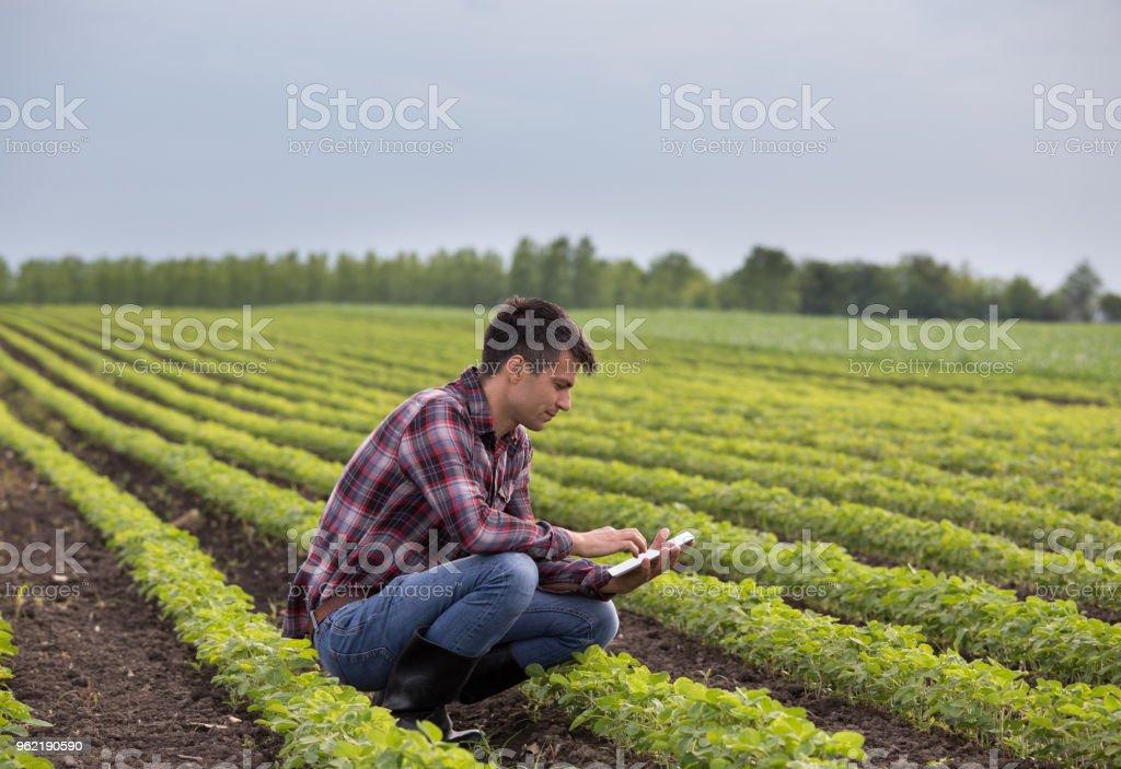 Bauer mit Tablette in Soja-Feld – Foto