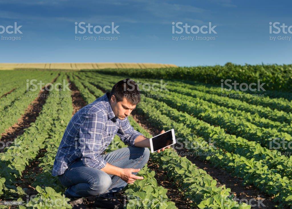 Bauer mit Tablet im Weizenfeld – Foto