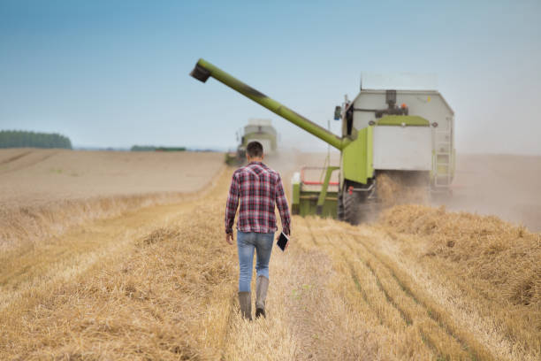 Farmer with tablet on field during harvest Rear view of handsome farmer with tablet walking in front of combine harvester during harvest in field farm worker stock pictures, royalty-free photos & images