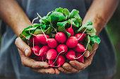 農家、野菜