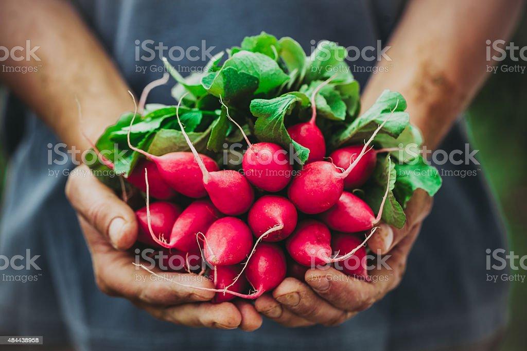 Agriculteur avec des légumes - Photo