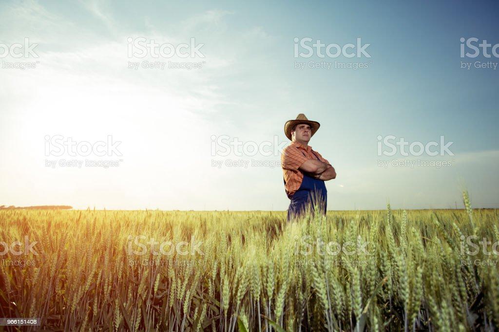 Farmer con trigo en las manos - Foto de stock de Actividad al aire libre libre de derechos