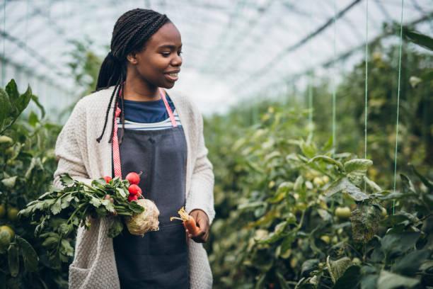 mujer del granjero con vegetales orgánicos frescos en sus manos - negras maduras fotografías e imágenes de stock