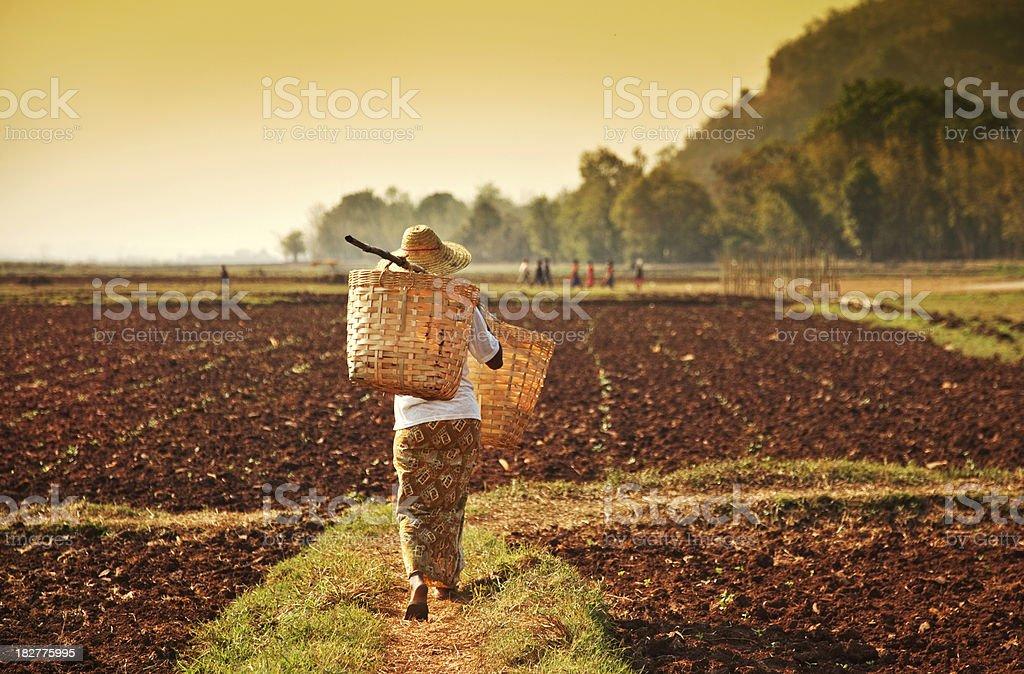 farmer woman in Asia royalty-free stock photo