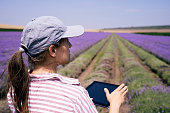 istock Farmer woman surveying the lavender harvest in an organic farm on a bright sunny day. Tractor harvesting the crop. Shot in Bulgaria. Agriculture. Women leaders. 1257380353