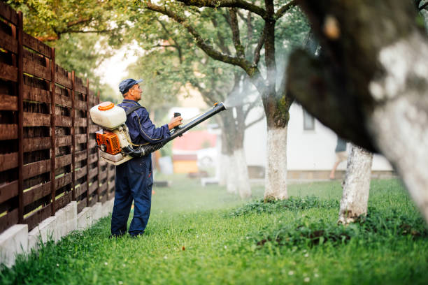 Farmer worker spraying pesticide treatment on fruit garden stock photo
