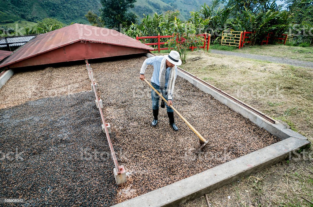 Farmer working at a Colombian coffee farm stock photo