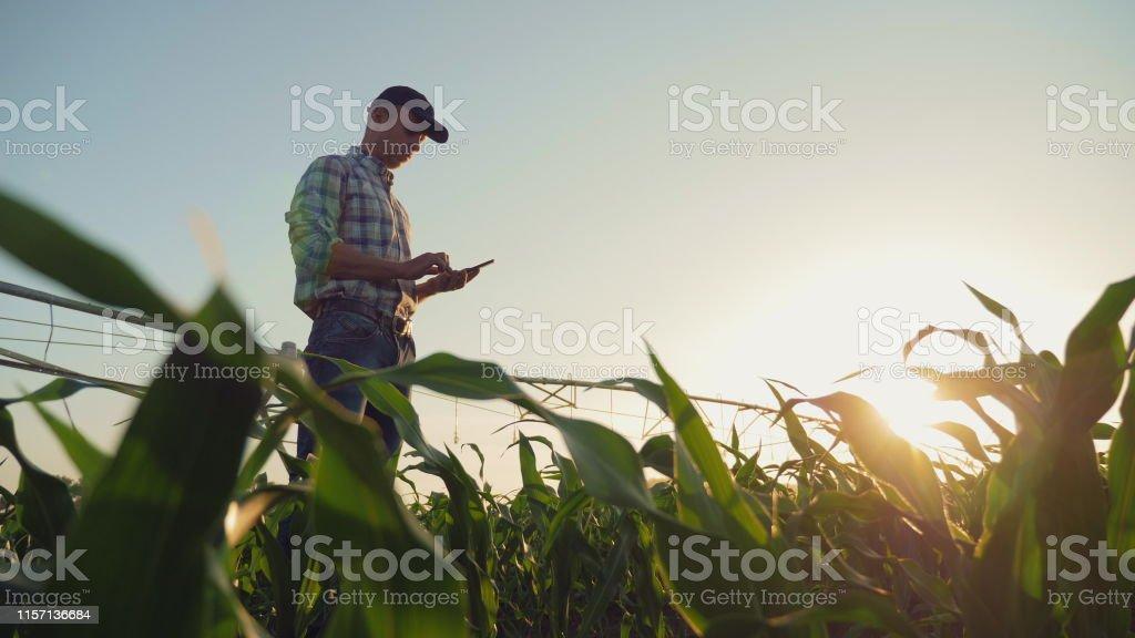 Çiftçi bir mısır tarlası çalışan, Smartphone kullanarak - Royalty-free Adamlar Stok görsel