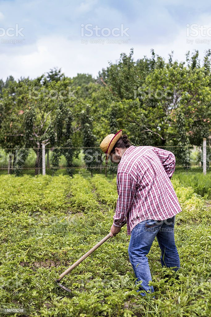 farmer working in the field royalty-free stock photo