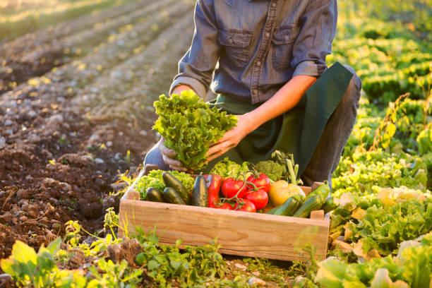 Landwirt arbeiten auf Feld – Foto