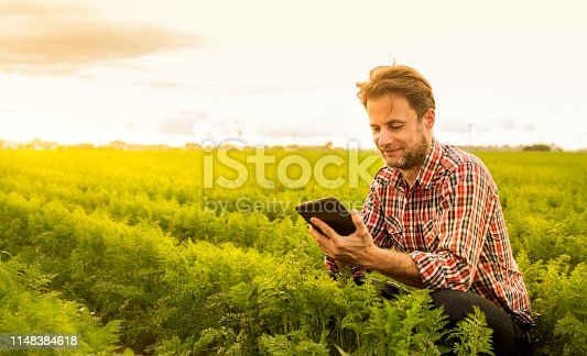 Forty years old caucasian farmer in plaid shirt working on (using) tablet in front of carrot field. Modern technology in agriculture - concept. Country outdoor scenery, gold sunset light.