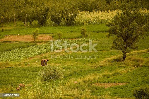 872393896istockphoto Farmer working on the field of Morocco. Agriculture 948555784
