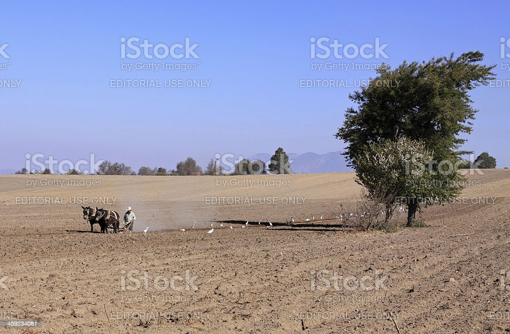 Farmer working on the field stock photo