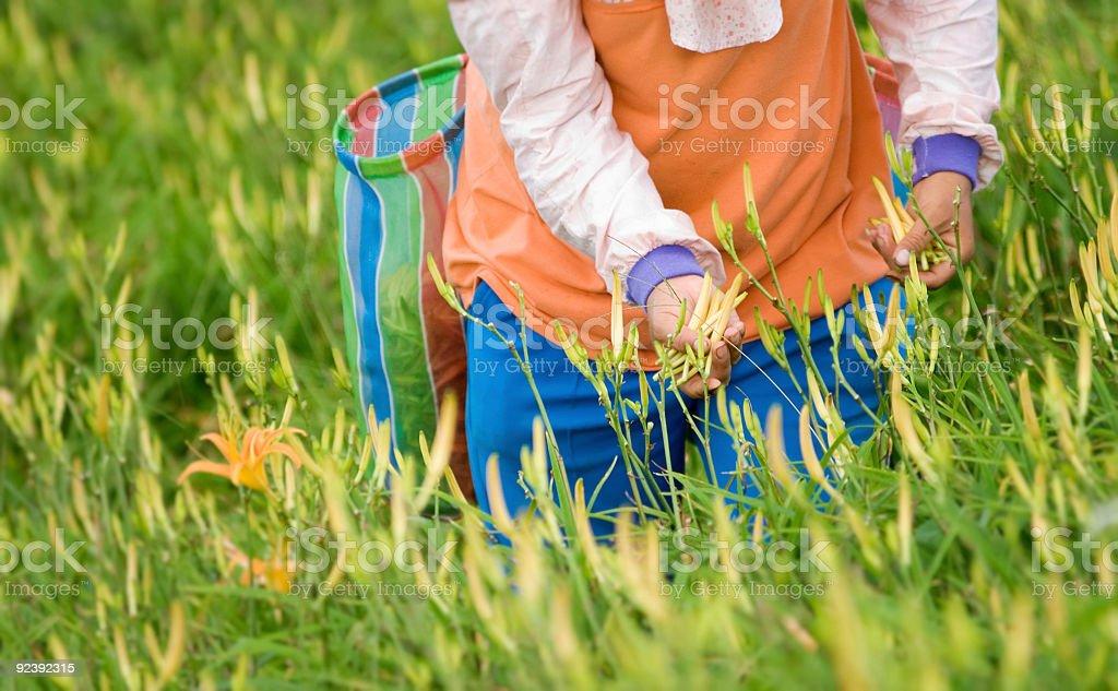 Farmer working royalty-free stock photo