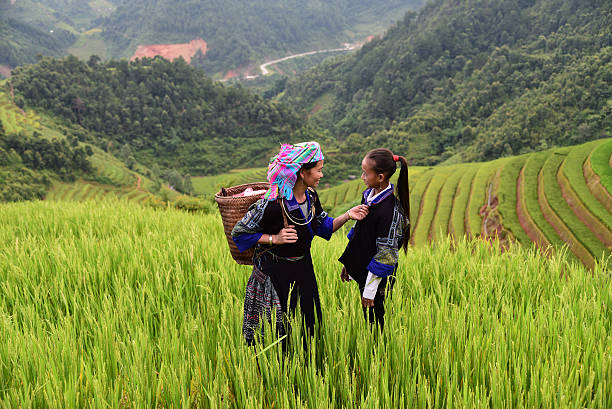 farmercarry basket on shoulder - indonesia stock photos and pictures