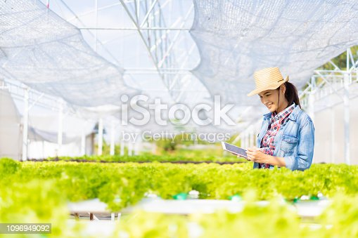 istock Farmers are recording data on tablets at Hydroponic vegetables salad farm. 1096949092