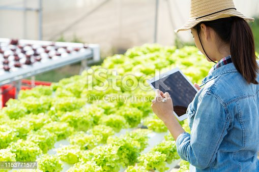 1096949092 istock photo Farmers are recording data on tablets at Hydroponic vegetables salad farm. 1153771577