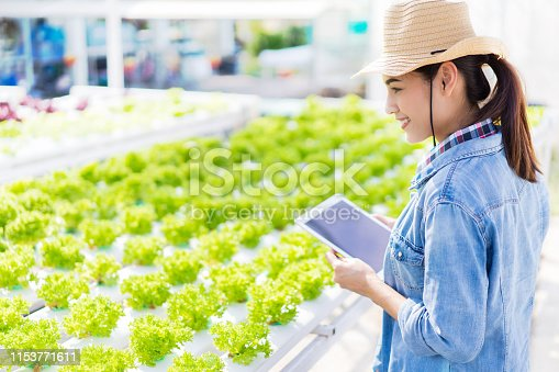 1096949092 istock photo Farmers are recording data on tablets at Hydroponic vegetables salad farm. 1153771611