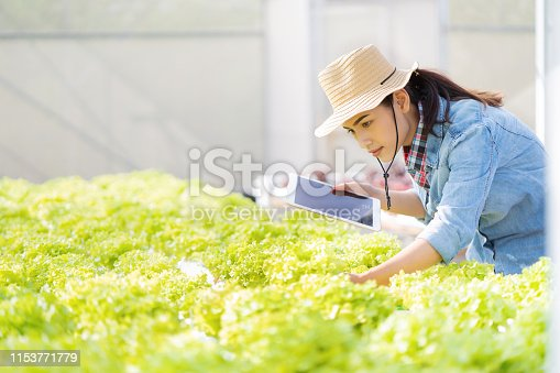 1096949092 istock photo Farmers are recording data on tablets at Hydroponic vegetables salad farm. 1153771779