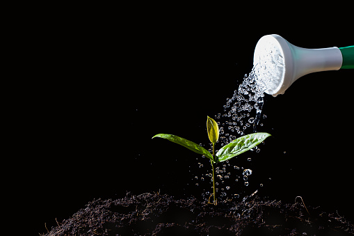 915680272 istock photo Farmers are watering seedlings on black background 956445854