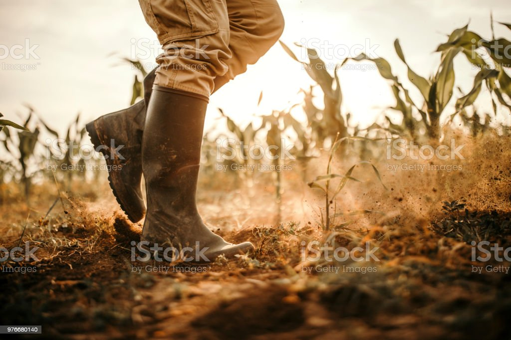 Farmers boots stock photo