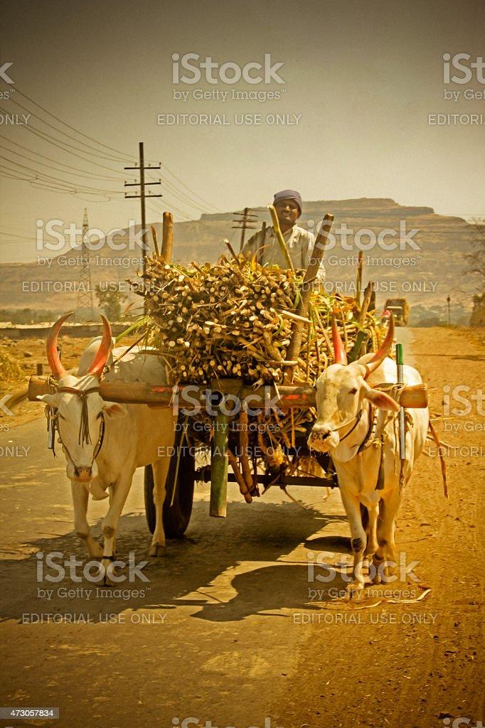Farmers carrying Sugar cane in a bullock cart, Maharashtra, India stock photo