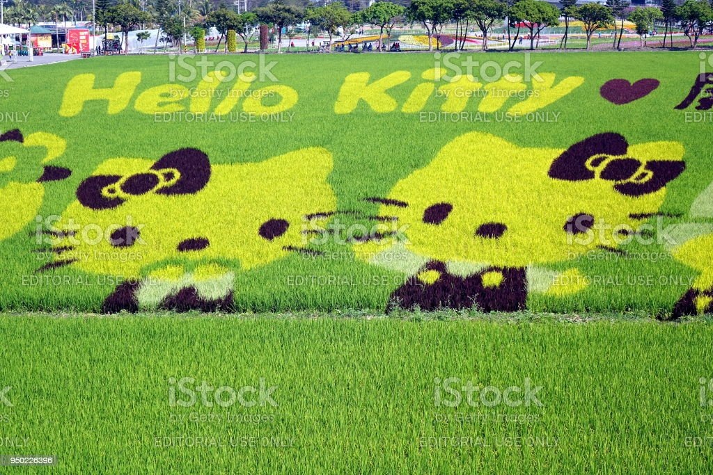 Farmers Create Hello Kitty Images in a Rice Field stock photo