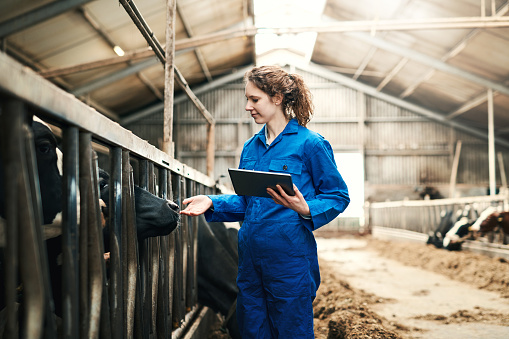 Shot of a young woman using a digital tablet while working at a cow farm