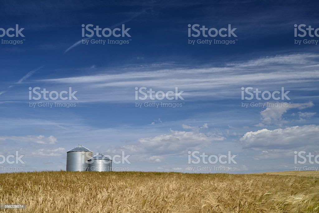 Os agricultores Field foto royalty-free