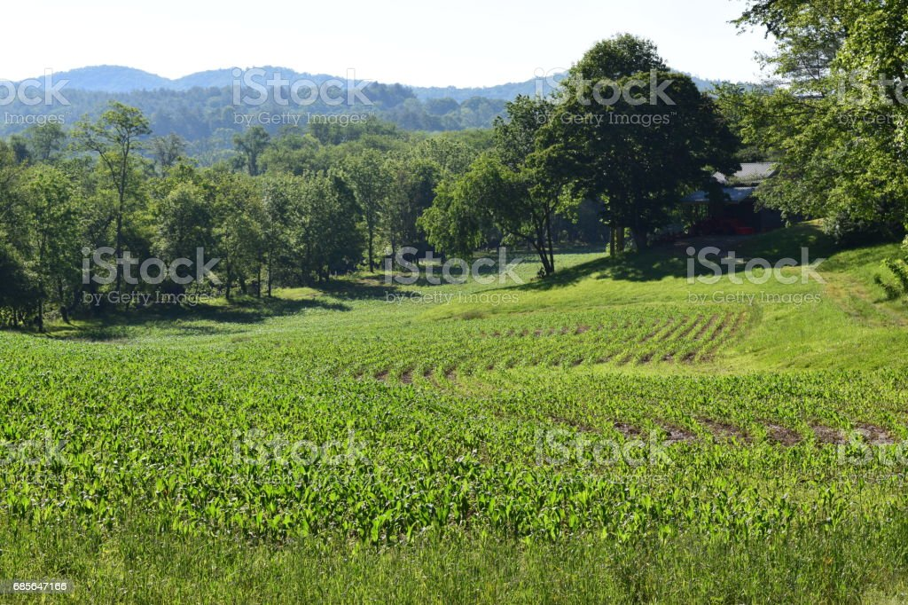 Farmer's growing field of crops a closer view stock photo