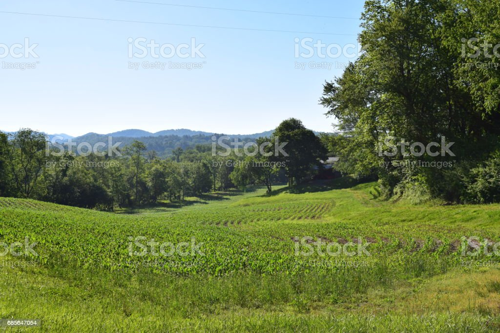 Farmer's growing field of crops foto de stock royalty-free