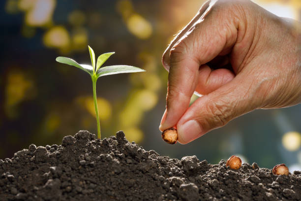 farmer's hand planting a seed in soil - seed stock photos and pictures