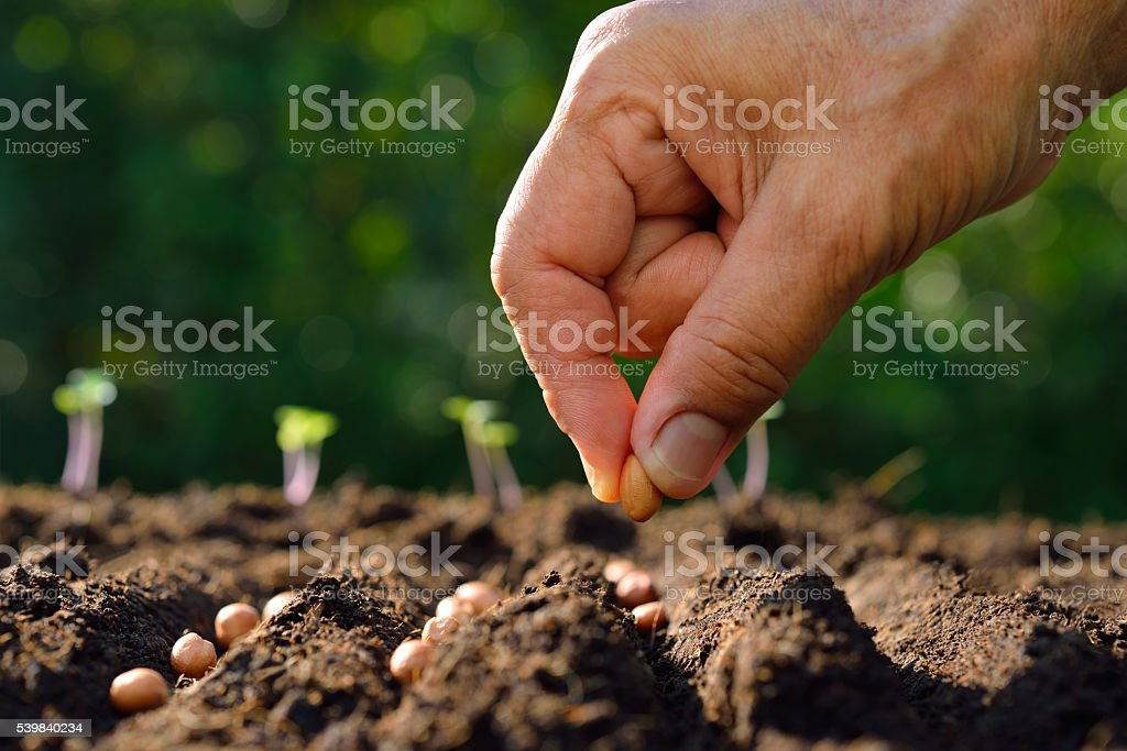 Farmer's hand planting seed in soil stock photo
