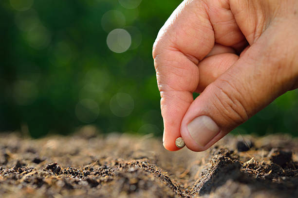 farmer's hand planting seed in soil - 種子 個照片及圖片檔